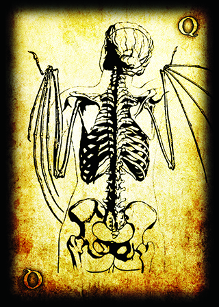 The Queen of Bones- A skeletal young woman with batlike wings